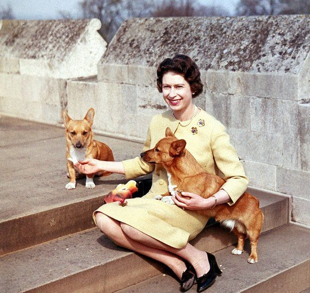 Queen Elizabeth and two corgis. There are a lot of photos of her with dogs. This is a quality I admire.
