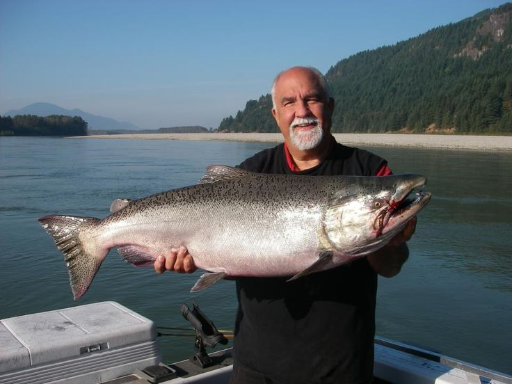 how to catch chum salmon in rivers