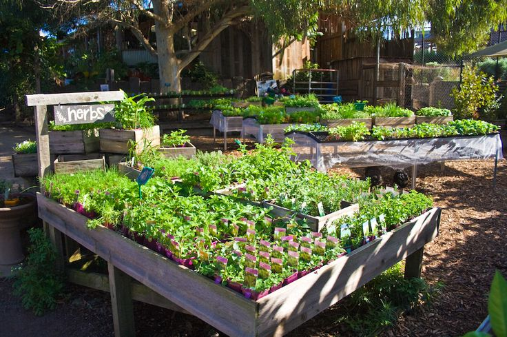 The herb garden at CERES Environment Park is thriving!