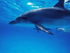 Hawaii Wild Dolphin Encounters