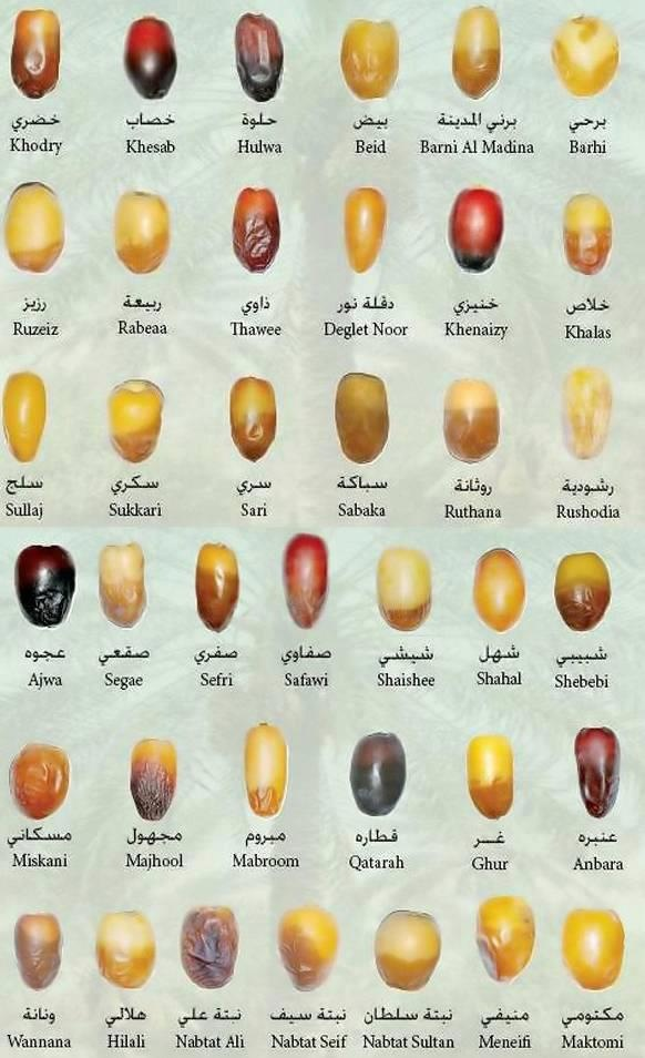 Dates (Khajoor) Varieties Cool list of various dates. RBar's only use organic dates!