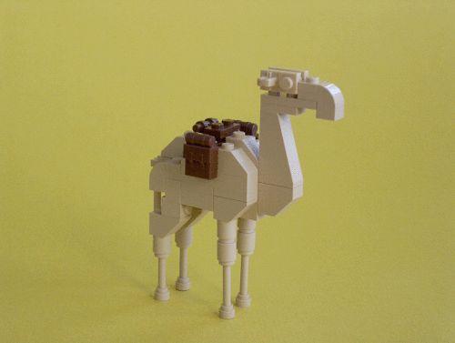 54 Best Camels Images On Pinterest Camel Camels And School