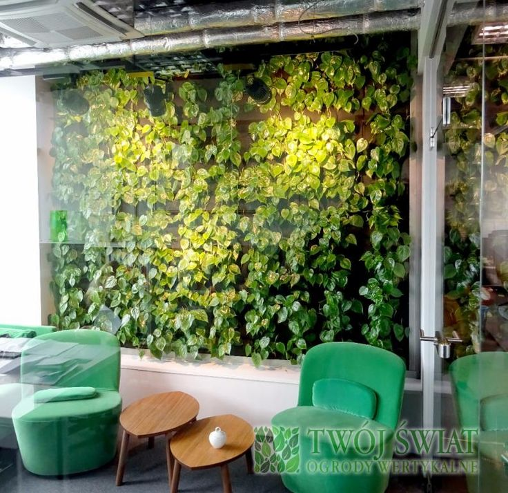 Kawa wśród zieleni. #verticalgarden #plantsonwall #coffeetime