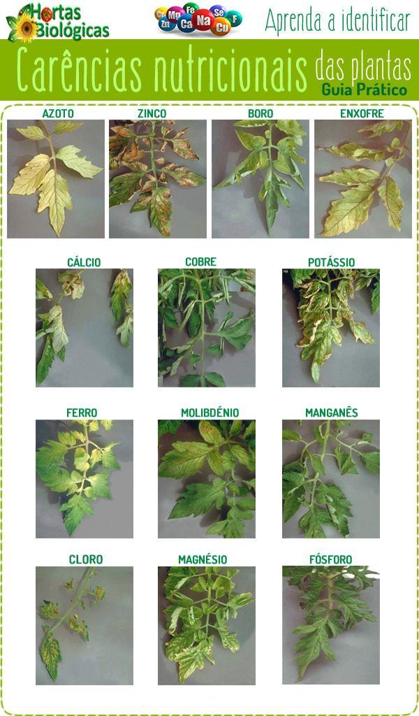 Quando as plantas ficam desnutridas, elas vão mostrar sintomas de que não estão saudáveis. Aprenda a identifica-los.