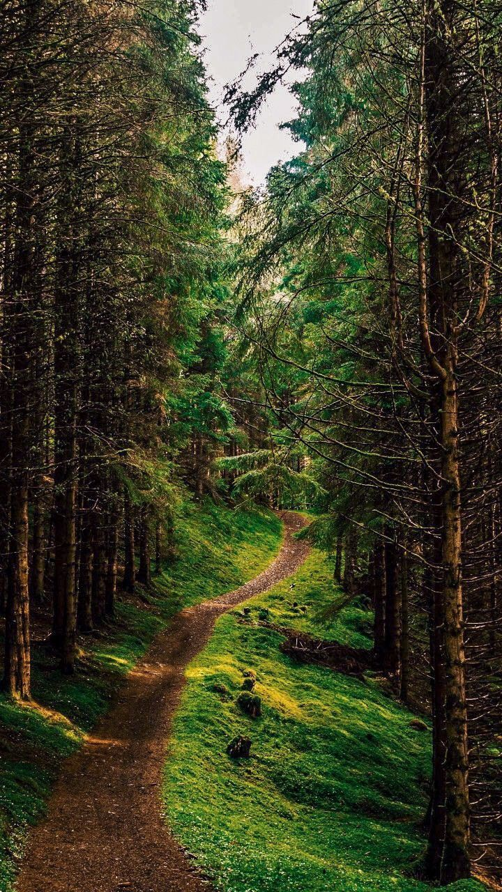 Forest Path Photographer And Location Unknown Beautiful Nature Forest Path Nature Pictures