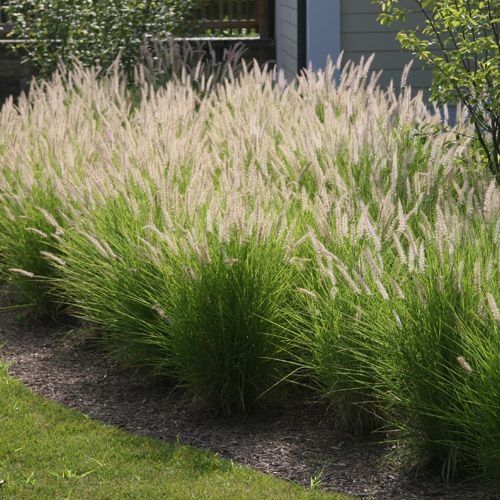 711 best images about primitive flowers and gardens on for Ornamental grass border design