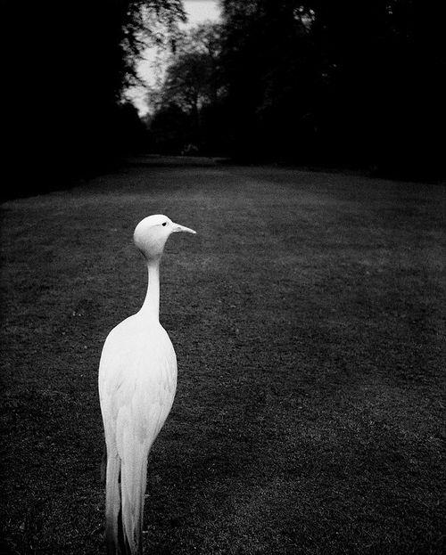 Bill Brandt: Early evening, Kew Gardens, c1932.
