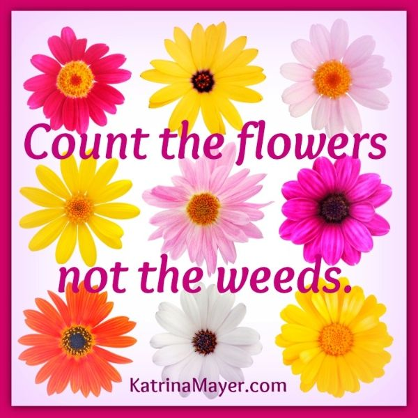 Quotes « Katrina Mayer. See More. Count The Flowers, Not The Weeds. Www. KatrinaMayer.com