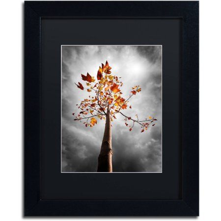 Trademark Fine Art Black Fall Canvas Art by Philippe Sainte-Laudy Black Matte, Black Frame, Assorted