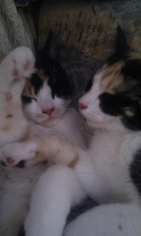 Cat cuddle time