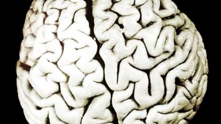 Aivot ja muisti