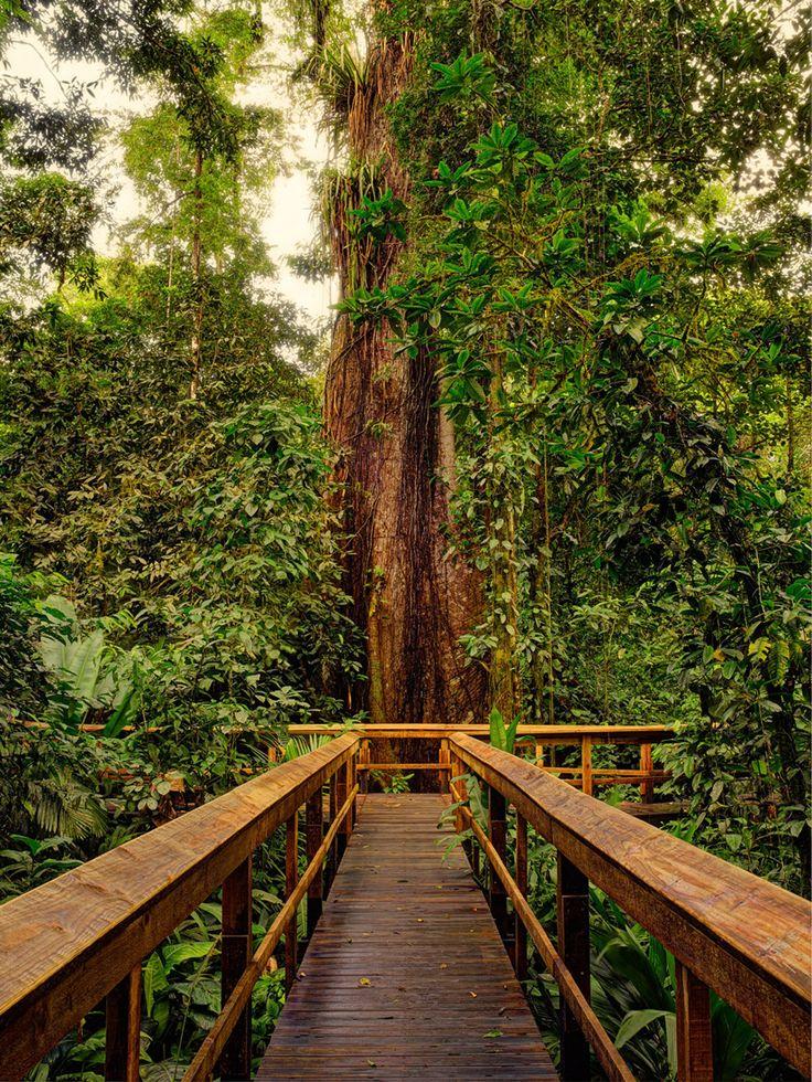 """Der """"Rainforest Boardwalk"""" bei Cinco Ceibas. Lies hier mehr über das Regenwalderlebnis. #CostaRica #PuraVida #CincoCeibas #Regenwald #Dschungel #Abenteuer #Adventure #Reisen  #Tropenwanderer"""