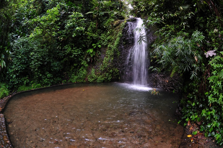 """On the municipality of #FondsSaintDenis, one of the most green of #Martinique, the #waterfall """"Saut du Gendarme"""" Kicks up a fuss offer a #refreshing stopping place. It is accessible for all by five small minutes of walking. Around the #waterfall, the space is fitted out for the #picnic. The waterfall in throws itself down from ten meters into an artificial bowl, which allows to #bathe in a very cool #water.© Gil Giuglio: Waterfall Saut, Space, Artificial Bowl, Martinique Chute"""