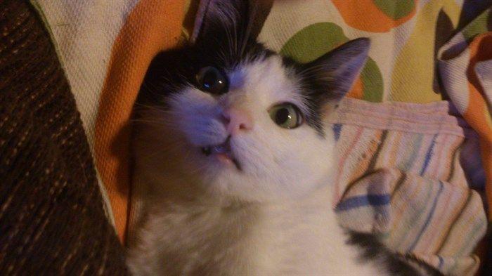 http://www.mascotasblogueras.com/curiosidades/el-curioso-vicio-del-gato-pixie