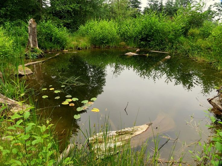 48 best images about regeneration and permaculture on for Aquaponics fish pond
