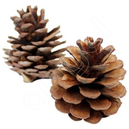 I love this Pine Cones 1Kg by Angel Aromatics | Pine Cones 1Kg - Bulk PINE CONES for sale (1KG - approx. 25-35). I found this at  http://www.angelaromatics.com.au/botanicals-and-pot-pourri/woodies/pine-cones