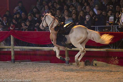 2012_02_18_spettacolo_i_cavalli_di_roma_BARBARAROPPO-6979