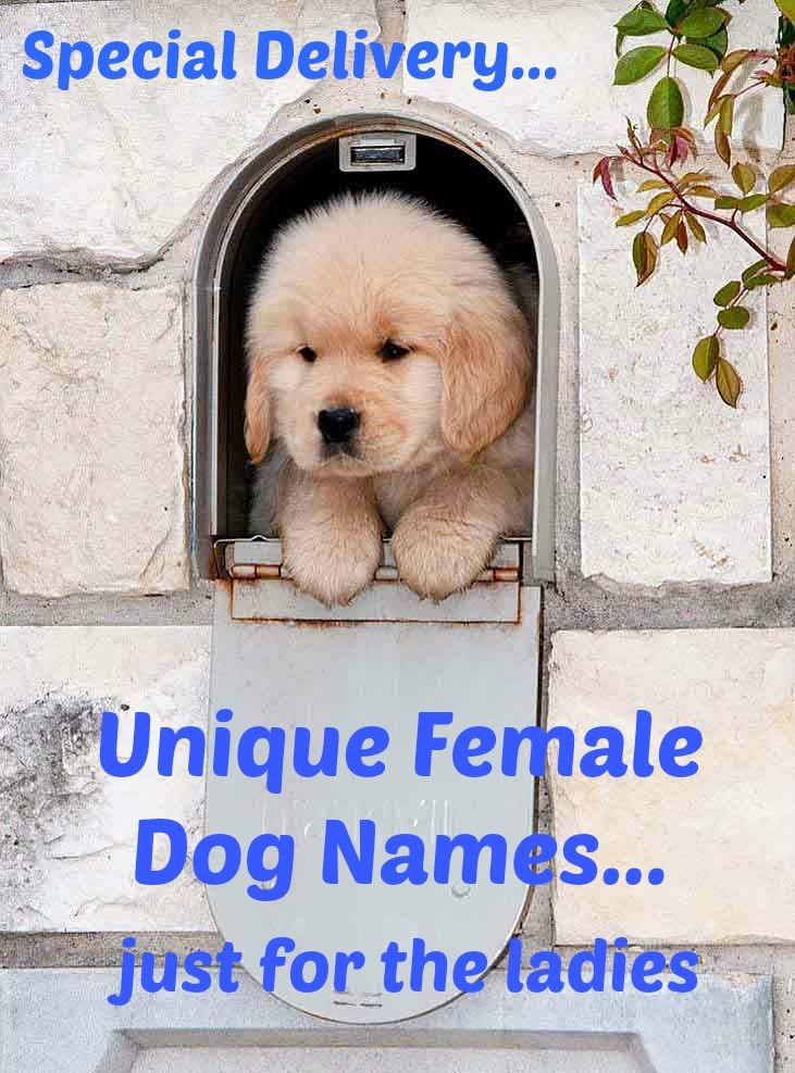 Special Delivery: Unique female dog names for the ladies... http://www.dog-names-and-more.com/female-dog-names.html