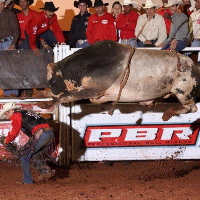 107 best images about Bull Riding on Pinterest | The bull ...