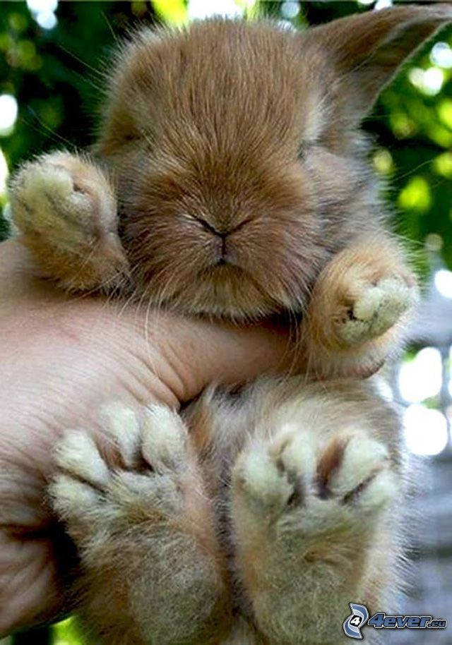 images about Bunnies Rabbit, A bunny and