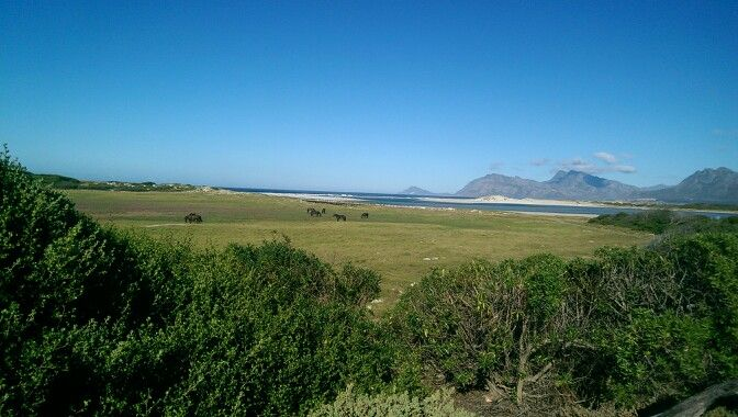 Flamingo Lake, Fisherhaven, Overberg, Western Cape, South Africa. Our breakfast view whilst we are here.