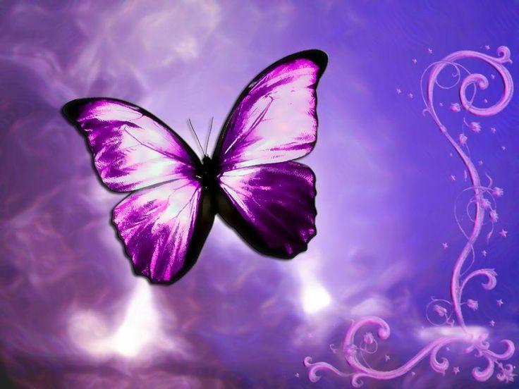 Beautiful ButterflyColors Purple, Beautiful Butterflies, Purple Butterflies, Favorite Colors, Bing Image, Purple Passion, Things Purple, Andrea Bocelli, Butterflies Kisses