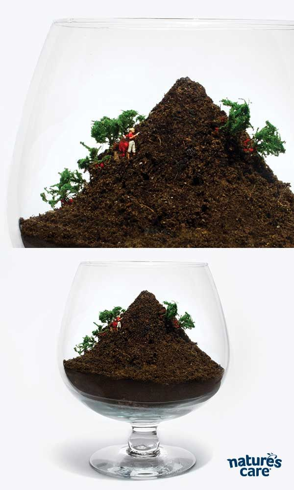 ... Of Strawberries And A Mountain Of Strawberries Will Make An Ocean Of  Daiquiris. This Mound Terrarium Is Made With Nature?s Care Organic Soil.s  Some Good ...