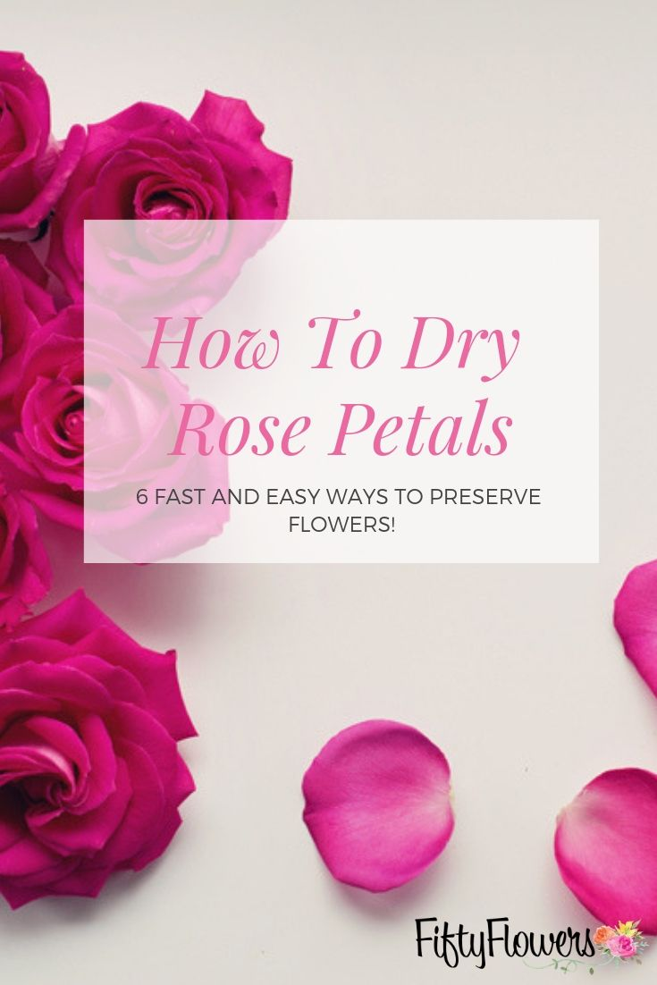 How To Dry Rose Petals 6 Fast Easy Ways To Preserve Flowers