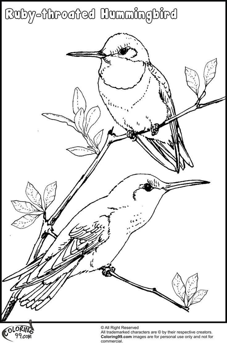 hummingbird colors のおすすめアイデア 25 件以上 pinterest