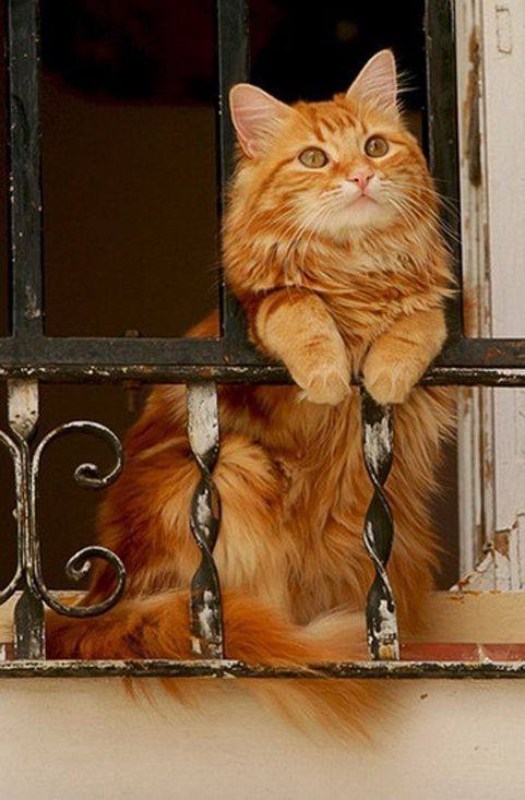 10 Best Amazing Videos For Cats. more here http://artonsun.blogspot.com/2015/03/10-best-amazing-videos-for-cats-more_29.html