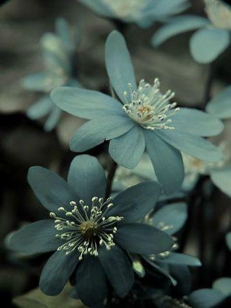 Linnea's hage 1: Colour, Bathroom Colors, Blue Flowers, Flora, Colors Pallette, Beautiful Flowers, A Tattoo, Colors Blue, House Colors Schemes