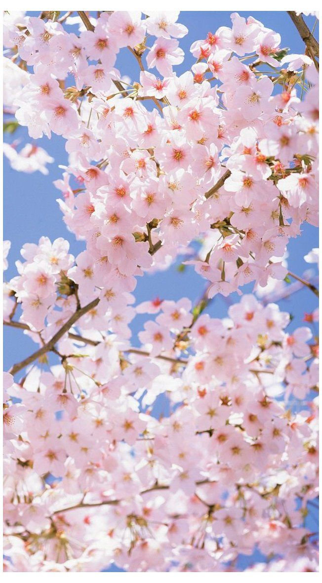 Iphone jasmine flower wallpaper hd