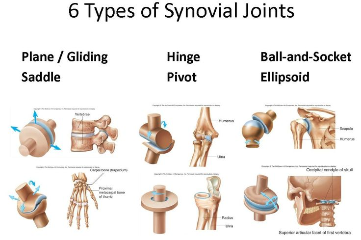 Examples of synovial joints - Synovial joints are most evolved and therefore most mobile type of joints. They possess the following characteristic features; There articular surfaces are covered with hyaline cartilage. This articular cartilage is avascular, non nervous and elastic. Lubricated with synovial fluid, the cartilage forms slippery surfaces for free movements.Between the articular surfaces there is a joint cavity filled with synovial fluid. The cavity may be partially or completely…