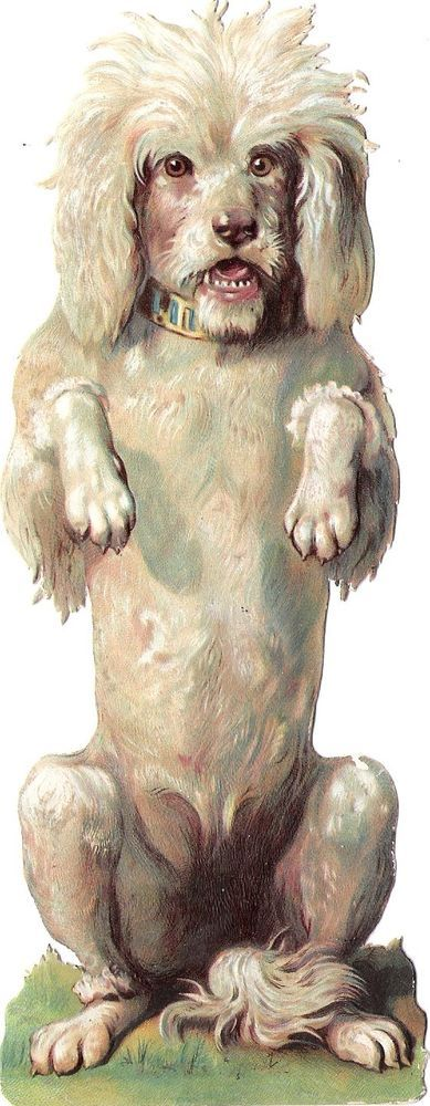 Oblaten Glanzbild scrap die cut chromo Hund dog XL 18,5 cm  Pudel poodle