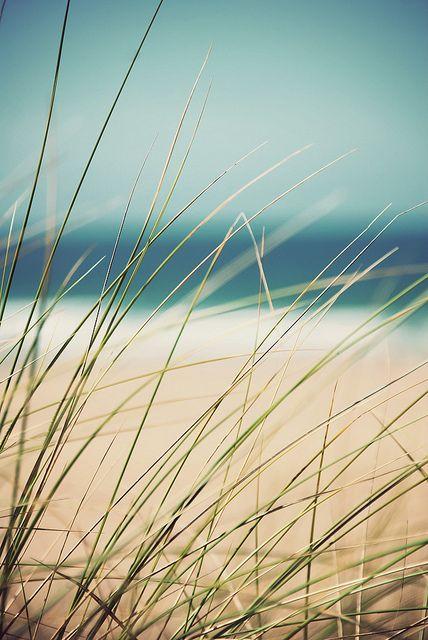 beach - seaside - costal living - Beach Grass