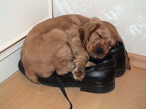 I sleep here cuz they smell like Daddy.