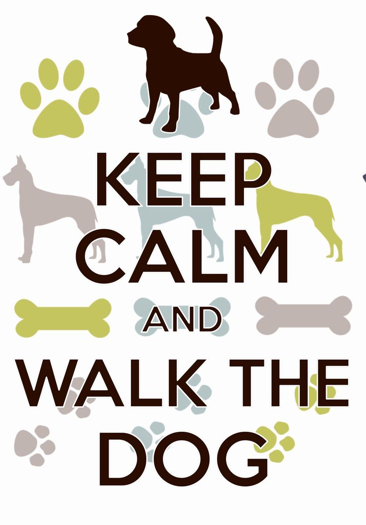 keep calm and walk the dog / created with Keep Calm and Carry On for iOS…