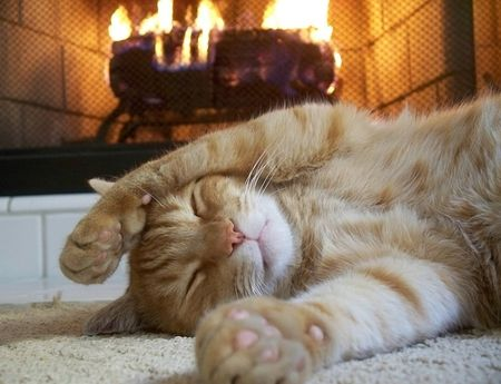 Fall Kittens Wallpaper Animals Laying By A Cozy Fireplace Cozy Sleeping