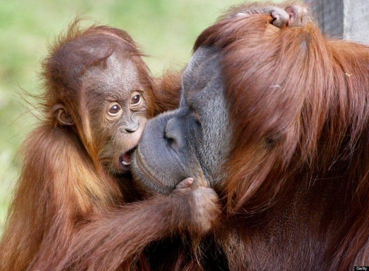 Bichinos demostrando que el amor existe (FOTOS)