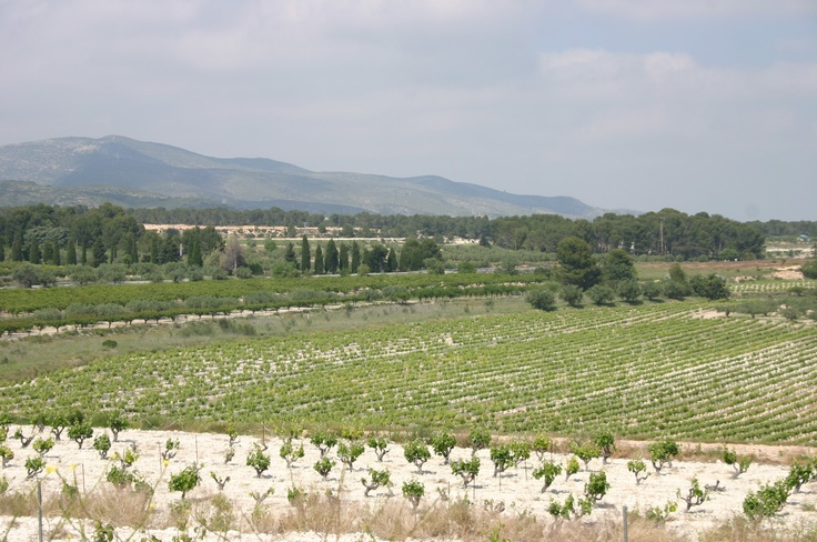 Early #vineyards in our town #ontinyent #valenciantuscany #inland #landscape #wine