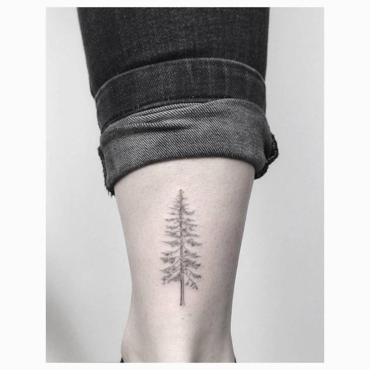Fine line pine tree tattoo on the right Achilles heel.