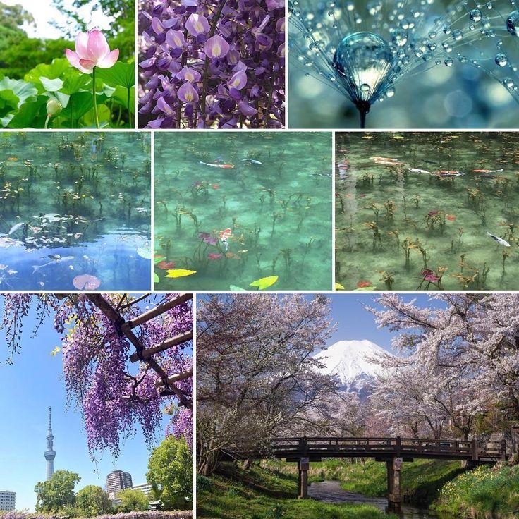5/1月曜日 * 新しい月 新しい週のはじまり〜 * 慌ただしく駆け足で過ぎ去った4月… 爽やかな空と柔らかい緑が美しい皐月 立ち止まっていた場所から 穏やかな5月の風が そっと背中を押してくれる… 少しずつ歩いて行けそうな… * * #5月#季節#空#植物#緑#花#美しい#空気#風#色#匂い#感じる#五感#歩く#ゆっくり#時間#流れる#音#静かに#場所#居心地#行きたい#写真#color #sky #flowers #green #photography #beautifull http://tipsrazzi.com/ipost/1504861625332406862/?code=BTiV6zWDhpO
