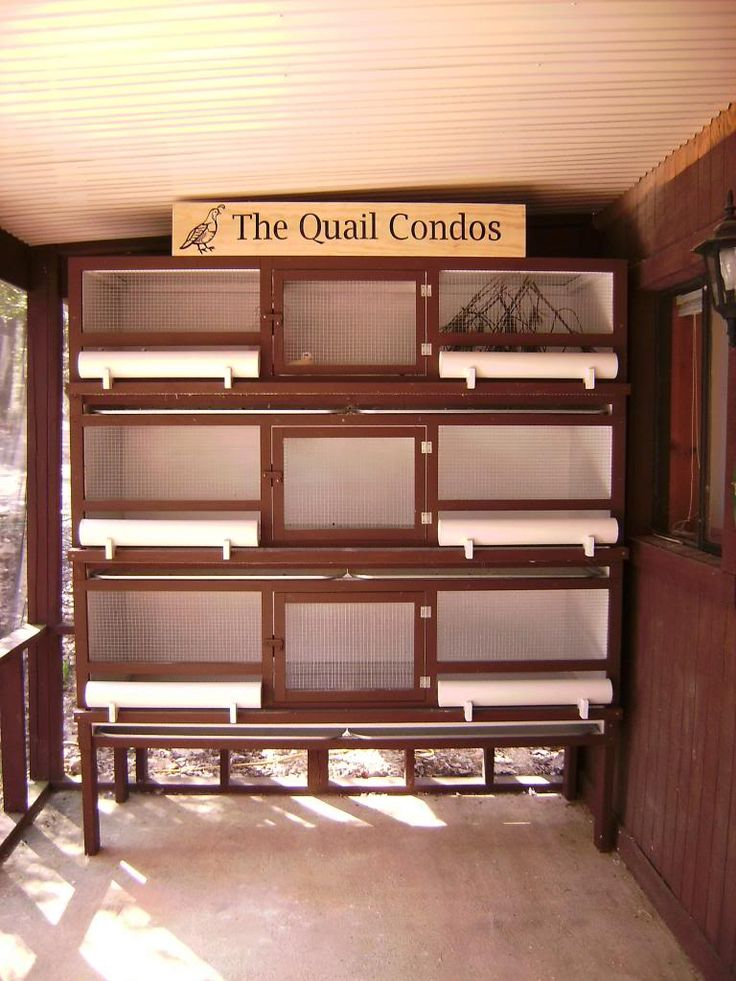 Who all is looking at quail now? LOTS OF PICTURES GIVE A GOOD IDEA OF HOW THIS WAS BUILT