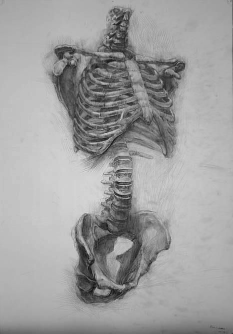 Paul Schwarz {human torso vertebral column skeleton drawing}