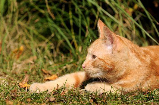 Dorosłe koty też są fajne