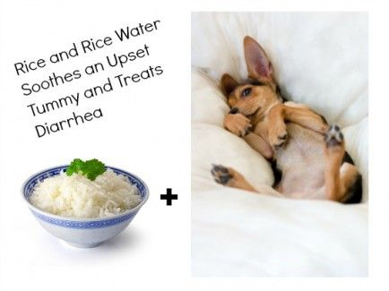 When your pet has diarrhea, include some cooked white rice in the wet food. It works on cats too. Of course, if problem doesn't go away, you should turn to your Vet. #dogsandcats #rice