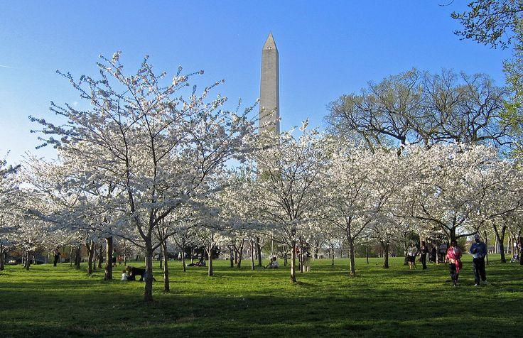 http://en.wikipedia.org/wiki/Washington,_D.C.