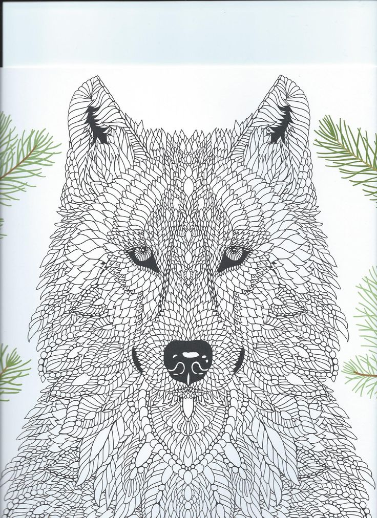 From The Coloring Book The Menagerie Animal Portraits To