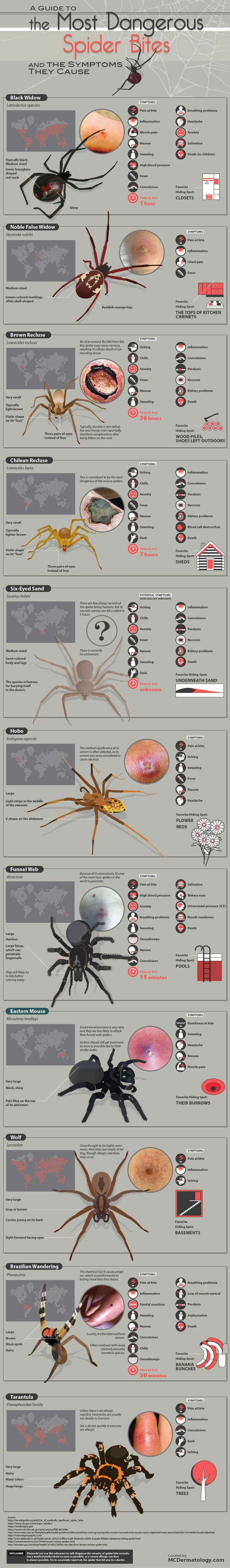 The Most Dangerous Spider Bites & Symptoms They Cause