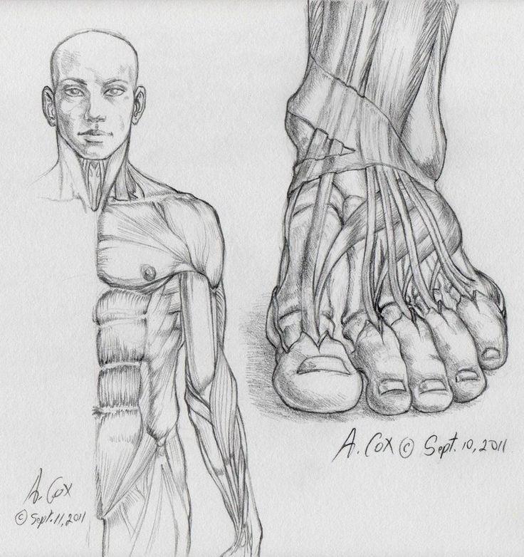 52 best Feet images on Pinterest | Human anatomy, Human body anatomy ...